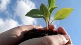 Πάρε μέρος στην εκστρατεία για την εμπορία σπόρων
