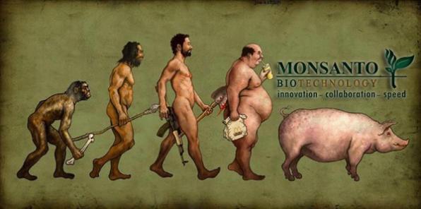 Monsanto878